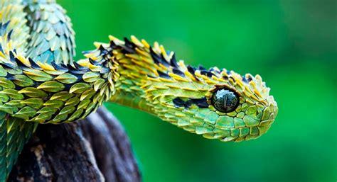 Principales depredadores de las serpientes :: Imágenes y fotos