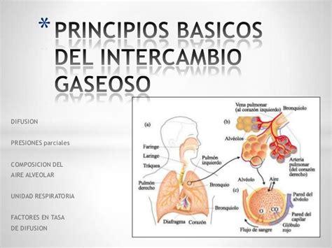 Principios basicos del intercambio gaseoso