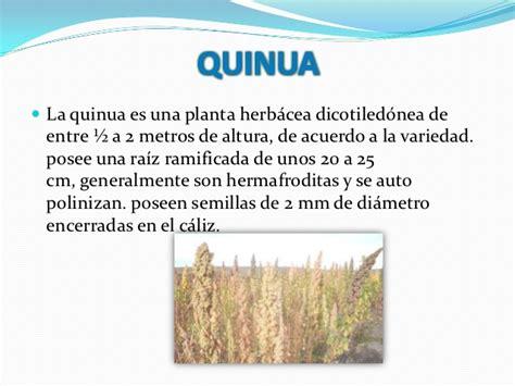 procesamiento y desaponificacion de la quinua