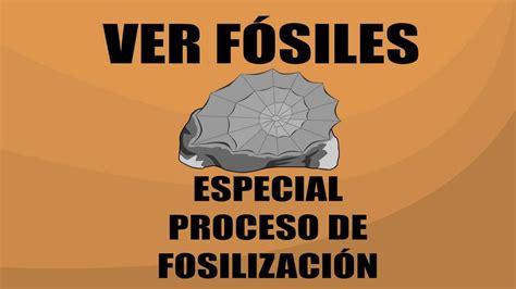 Proceso de fosilización   Ver Fósiles   YouTube