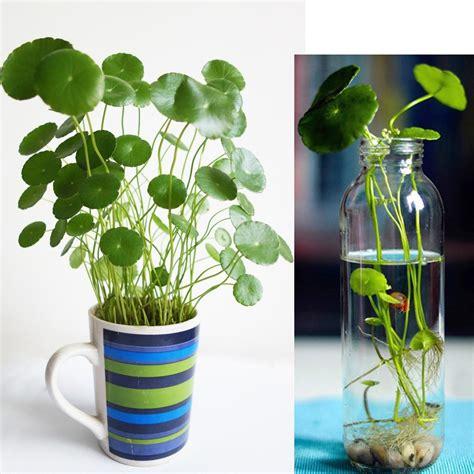 Promoción de Plantas De Agua Fría - Compra Plantas De Agua ...