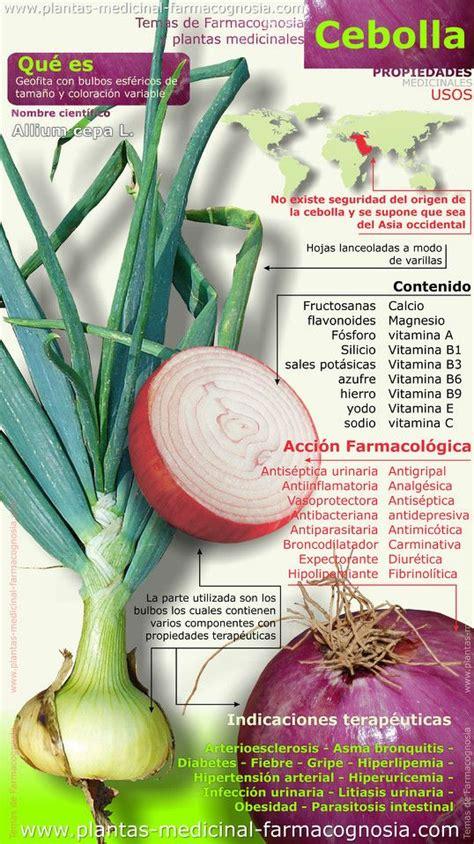 Propiedades de la cebolla. Infografía - Farmacognosia ...