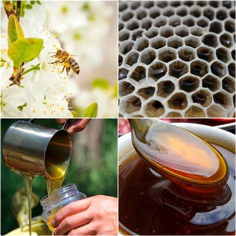 Propiedades de la Miel: beneficios de su consumo, usos y ...