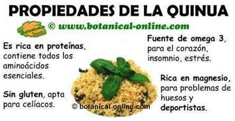 propiedades medicinales y beneficios de la quinoa o quinua ...