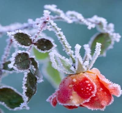 Protege tus plantas del frío: macetas y jardines pequeños ...