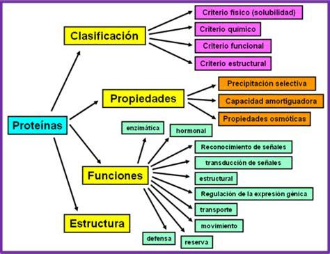 Proteínas: Cuadros sinópticos y comparativos | Cuadro ...