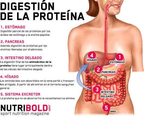 Proteínas vs Aminoácidos: ¿Es mejor consumir proteína o ...