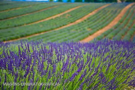 Provence Dicas e Roteiro de Viagem: Guia Completo