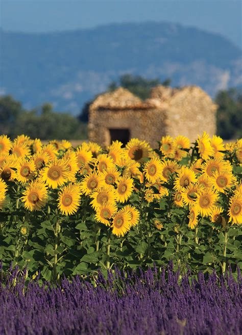 Provence, France: 8-Day Itinerary | Andrew Harper