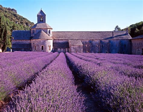 Provence, France – Lavender fields forever – This sick blog