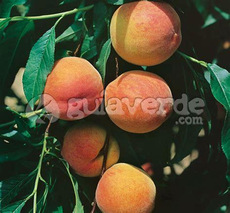 Prunus persica  Springcrest    Melocotonero, melocotn