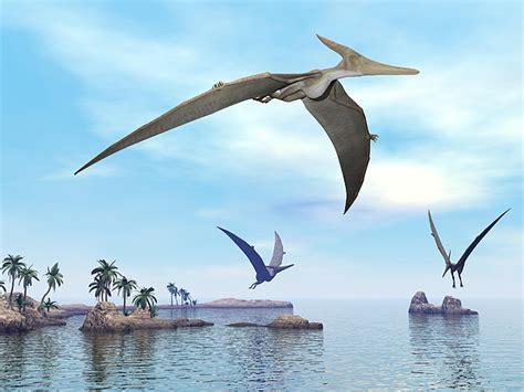 Pteranodon Dinosaurs Flying   3d Render by Elena Duvernay