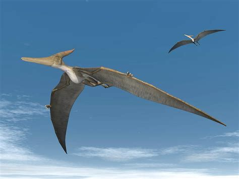 Pteranodon Flying | www.imgkid.com   The Image Kid Has It!