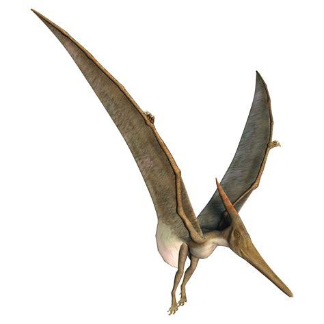 Pterodáctilo   Pterossauros   InfoEscola