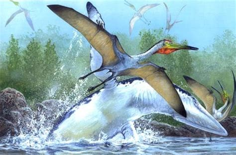 Pterodactylus Pictures & Facts   The Dinosaur Database