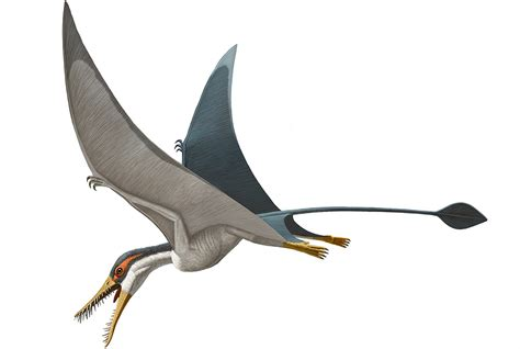 Pterosaur history and some interesting facts