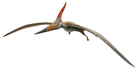 Pterosaurios: Volar en la Era de los Dinosaurios ...