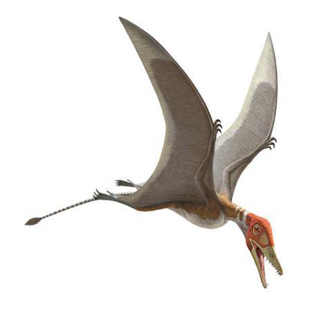 Pterosaurs Exhibition Opens Saturday, April 5