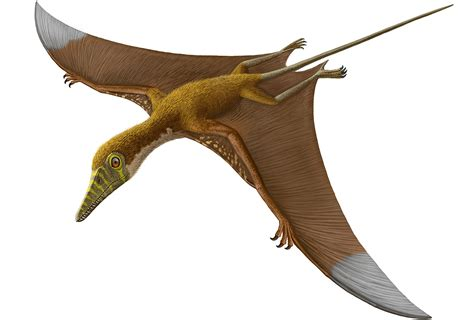 Pterosaurs, Flight in the Age of Dinosaurs: How Did ...