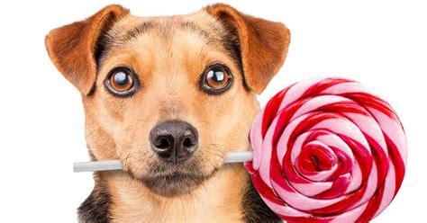 puedo darle dulce a mi perro
