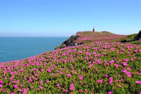 purple flower field near the ocean free image | Peakpx