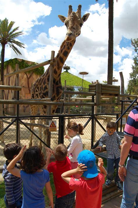 Que alta es la jirafa