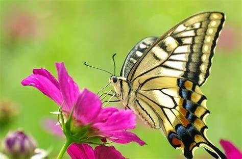 Que Comen Las Mariposas?   Donde Viven, Como Nacen
