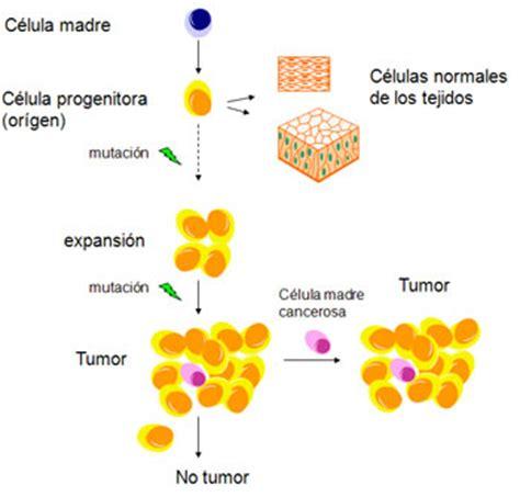¿Qué es el cáncer y cómo se desarrolla?