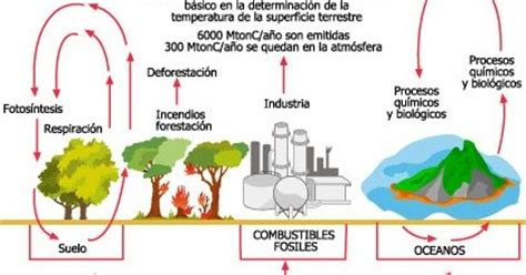 ¿Qué es el ciclo del carbono? | Página de curiosidades y más