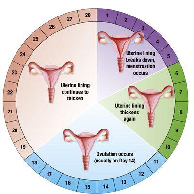 ¿Qué es el ciclo menstrual?