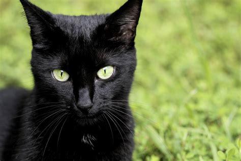 Qué es el melanismo: 8 espectaculares animales negros - VIX