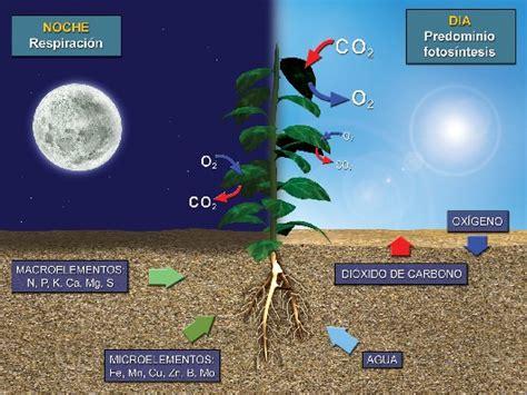 ¿Que es la fotosintesis?   Taringa!