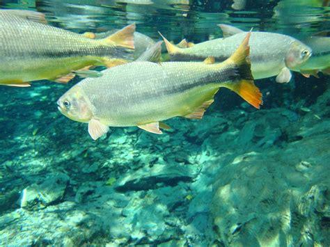 Qué es la osmorregulación en peces de agua dulce y agua salada