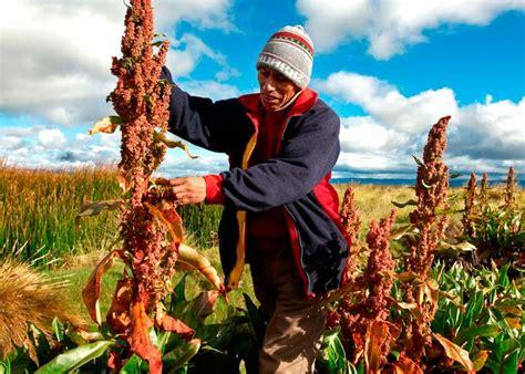 Que es la Quinoa ¿Quieres conocerla? | Yotuspanishoil.com