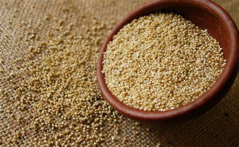 ¿Qué es la quinoa?