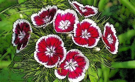 ¿Qué es Plantas Ornamentales?   Su Definición, Concepto y ...