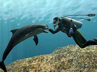 ¿Que es ser un Biólogo marino? - VETERINARIA MARINA