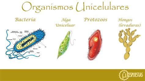 ¿Qué es un organismo unicelular? » Respuestas.tips