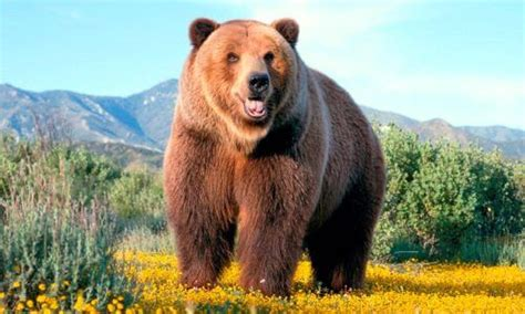 Qué es un oso. Características, tipos y hábitat  con fotos ...