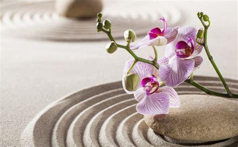 Qué es y para qué sirve el Feng Shui | La decoración Feng Shui