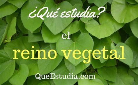 ¿Qué estudia el reino vegetal?
