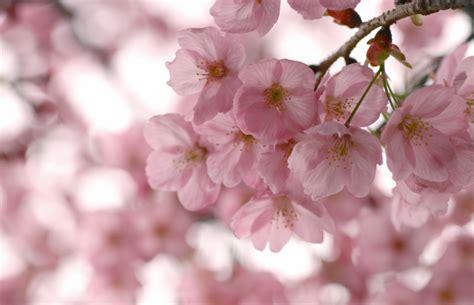 ¿Qué factores debo tener en cuenta para cuidar las flores ...