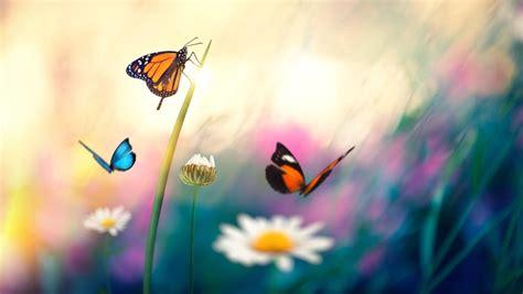 ¿Qué fueron primero, las mariposas o las flores?