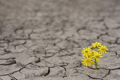 ¿Qué nos hace ser resilientes?   Martha_debayle   W Radio ...