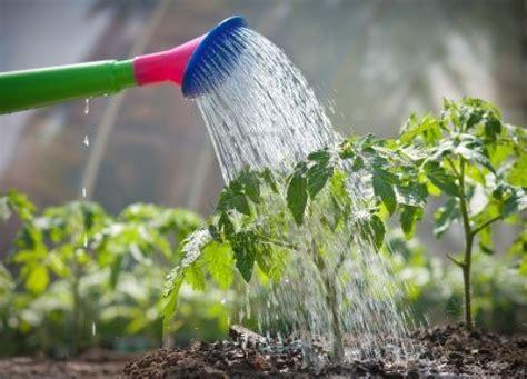 ¿Qué ocurre al regar las plantas con agua caliente?