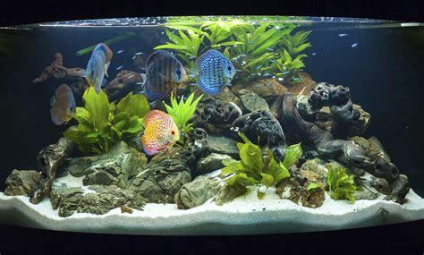 ¿Qué peces escoger para mi acuario? - IMujer