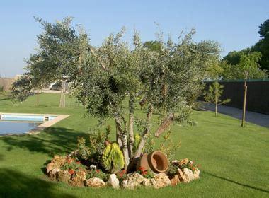 ¿Qué plantar al pie de un olivo u otros árboles?