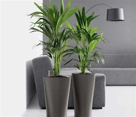 Qué plantas hay que tener en casa | OVACEN