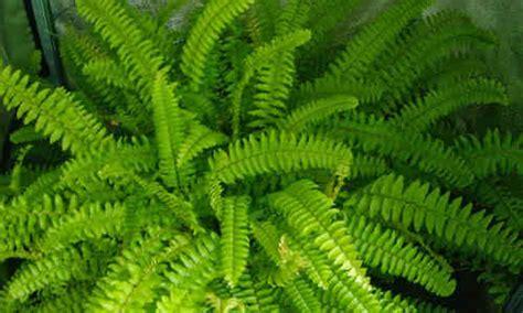 ¿Qué plantas son beneficiosas para nuestro hogar según el ...