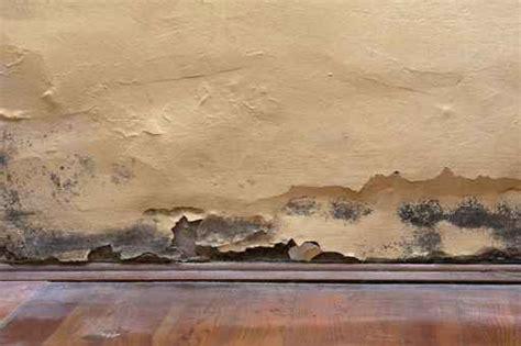 ¿Qué relación hay entre el moho en las paredes y la ...